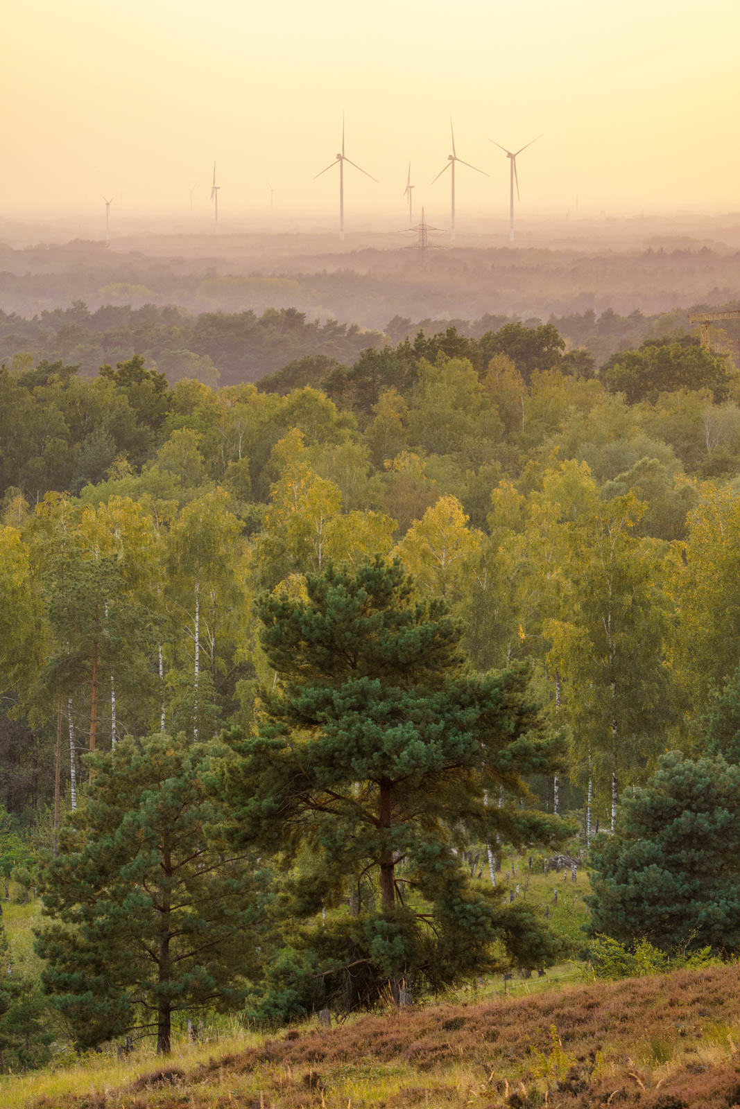 Wind turbines in the Teutoburg Forest at dusk in September 2020 (Oerlinghausen, Germany).